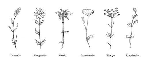 dibujo flores de campo